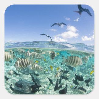 Lagoon safari trip featuring Stingrays Square Sticker