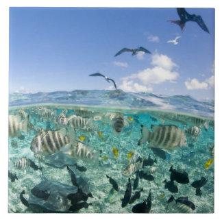 Lagoon safari trip featuring Stingrays Tile