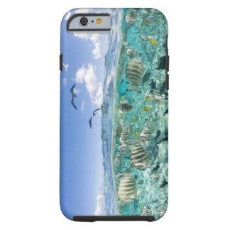 Lagoon safari trip featuring Stingrays Tough iPhone 6 Case