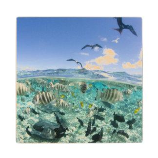 Lagoon safari trip featuring Stingrays Wooden Coaster