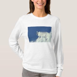 Lagopus del Alopex del zorro ártico) un zorro Playera