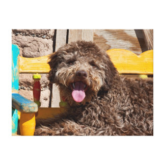 Lagotto Romagnolo Lying On A Wooden Bench Canvas Print