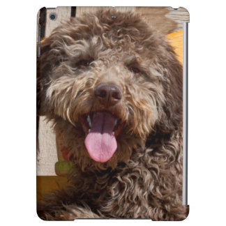 Lagotto Romagnolo Lying On A Wooden Bench Cover For iPad Air