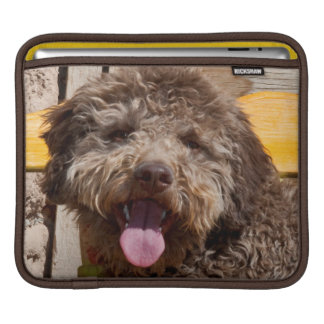 Lagotto Romagnolo Lying On A Wooden Bench iPad Sleeve