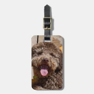 Lagotto Romagnolo Lying On A Wooden Bench Luggage Tag