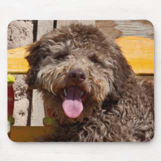 Lagotto Romagnolo Lying On A Wooden Bench Mouse Pad