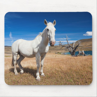 Laguna Azul, landscape with horses Mouse Pad