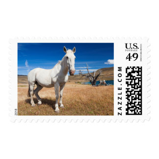 Laguna Azul, landscape with horses Stamps
