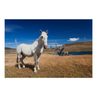 Laguna Azul, landscape with horses Poster