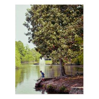 Laguna de Audubon Tarjetas Postales