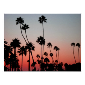 Laguna Palm Trees Poster
