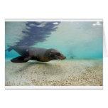 Laguna subacuática del paraíso del león marino tarjetas