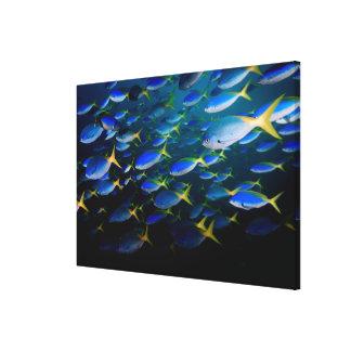 Laja Ampat 5 subacuáticos Impresiones De Lienzo