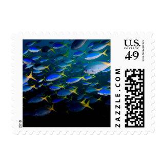 Laja Ampat 5 subacuáticos Sellos Postales