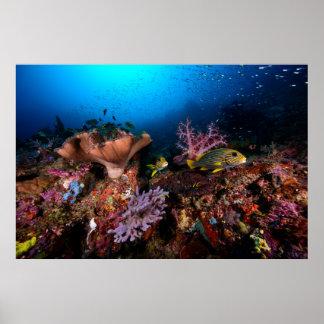 Laja Ampat subacuático Póster