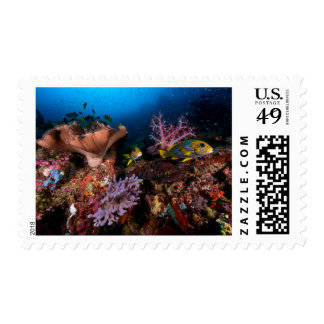 Laja Ampat Underwater Postage Stamp