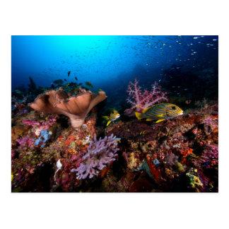 Laja Ampat Underwater Postcard