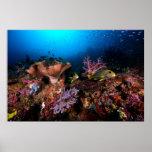 Laja Ampat Underwater Poster