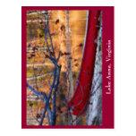 Lake Anna Virginia Postcard