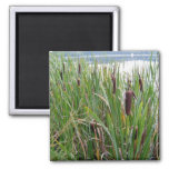 Lake/Cattails Magnet