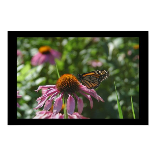 Lake Como Park Butterfly Poster