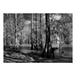 Lake Cypress in Black and White Poster