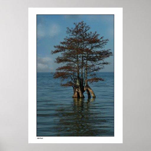 Lake Cypress Poster Print