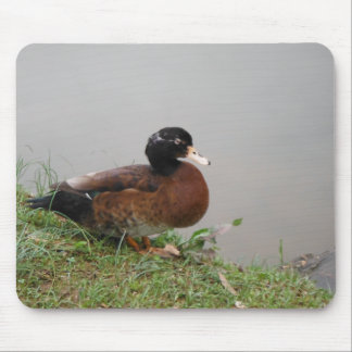 Lake Duck Photography Wildlife Nature Mouse Pad