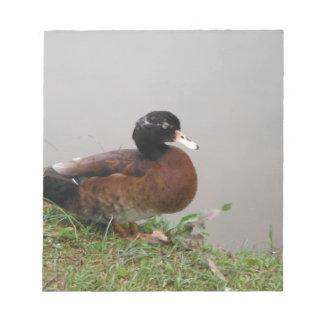 Lake Duck Photography Wildlife Nature Memo Notepad