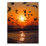 Lake Erie Sunset Post Card