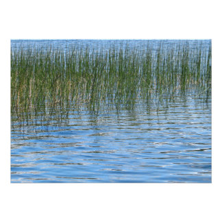 Lake Grasses Custom Announcement