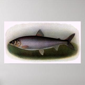Lake Huron Herring Painting Print
