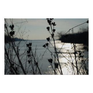 Lake in background of weeds close focus posters