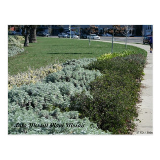 Lake Merritt Plant Mosaic Postcard