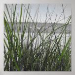 Lake Michigan behind grass Posters