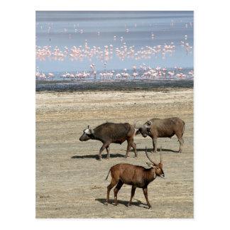 Lake Nakuru/Kenya Postcard