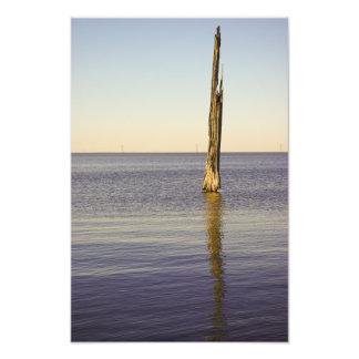Lake Pontchartrain Cypress Tree Photo Print