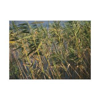 """Lake Reeds"" Canvas Print"
