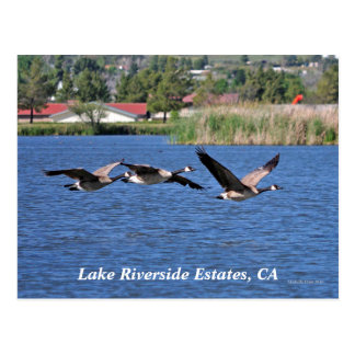 Lake Riverside Estates, CA Postcard