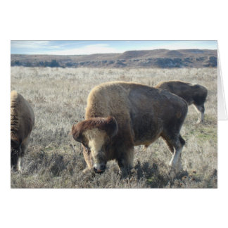 Lake Scott State Park Bison Card