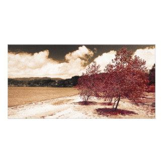 Lake shore card