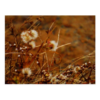Lake side Cream Dried Flowers Postcard