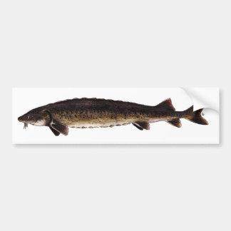 Lake Sturgeon - Acipenser fulvescens Car Bumper Sticker