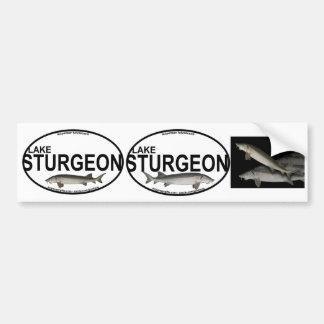 Lake Sturgeon Bumper Stickers