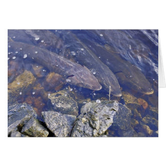 Lake Sturgeon Greeting Card