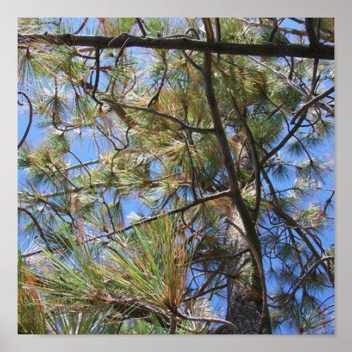 Lake Tahoe Blue Skies with Fall Pine Tree Poster
