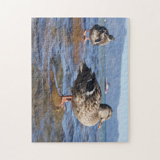 Lake Tahoe Duck Puzzle