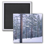 LAKE TAHOE STATE PARK, NEVADA. USA. Fresh snow 2 Inch Square Magnet