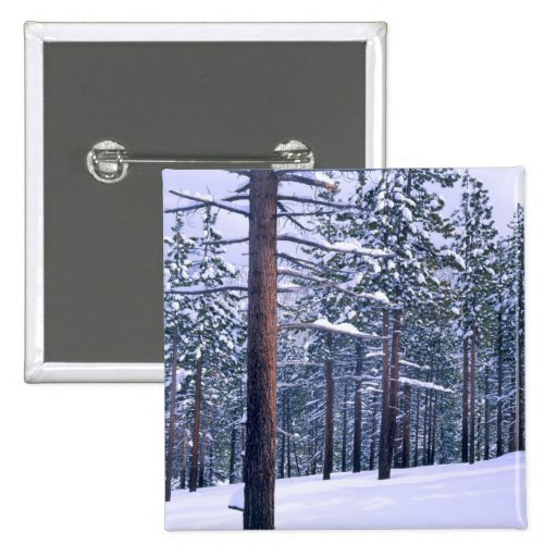 LAKE TAHOE STATE PARK, NEVADA. USA. Fresh snow Pinback Buttons