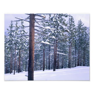 LAKE TAHOE STATE PARK, NEVADA. USA. Fresh snow Photo Print